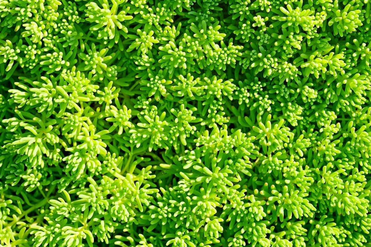 Como complementar o paisagismo com grama decorativa e pedras para jardim
