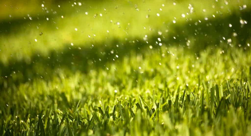 Grama sintética empoça água de chuva?
