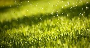 Grama sintética empoça água de chuva erbus